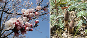 2011.3.25 春.JPG
